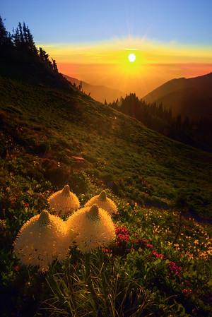 Four Beagrass Standing Tall -Tolmie Peak, Mount Rainier National Park, WA