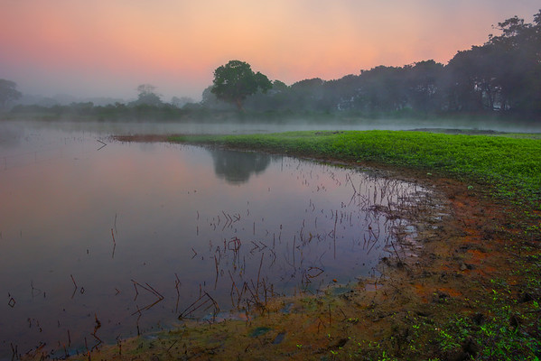 Leading Lines Into The Tree At Sunrise Kaziranga National Park, Assam, North-Eastern India