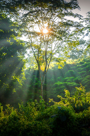 Sun Rays Filling The Forest Kaziranga National Park, Assam, North-Eastern India