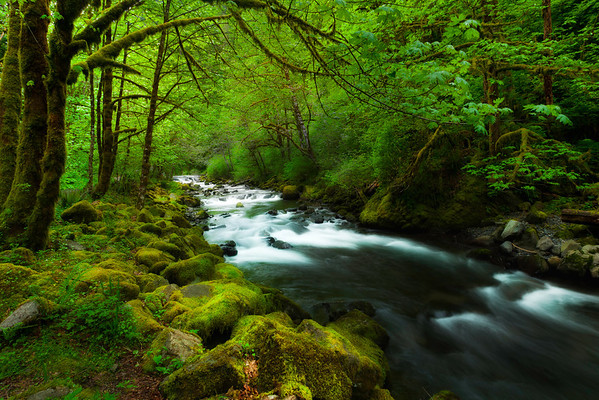 The Stunning Greens Of The Columbia Gorge - Columbia Gorge Scenic Area,