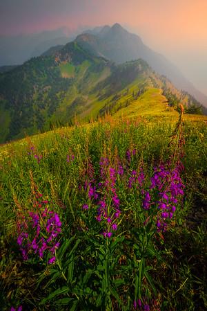 Idaho Pass During Wildflower Season - Idaho Pass, Kootenay Rockies, BC, Canada