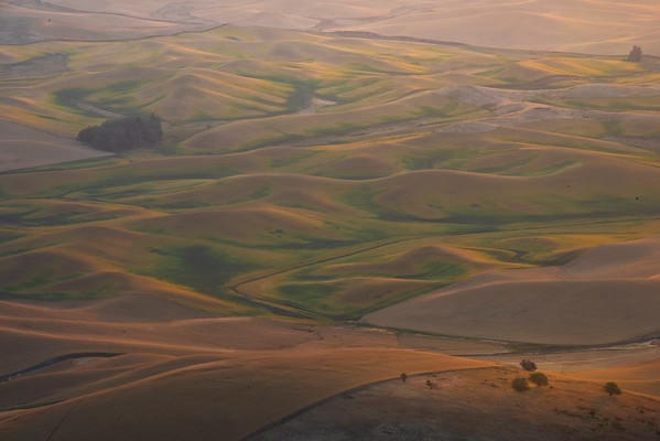Mixtures Of Golden Green and Yellow On Steptoe - Steptoe Butte State Park, Palouse, Eastern Washington