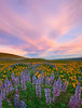 Pattens In Nature - The Dalles, Washington