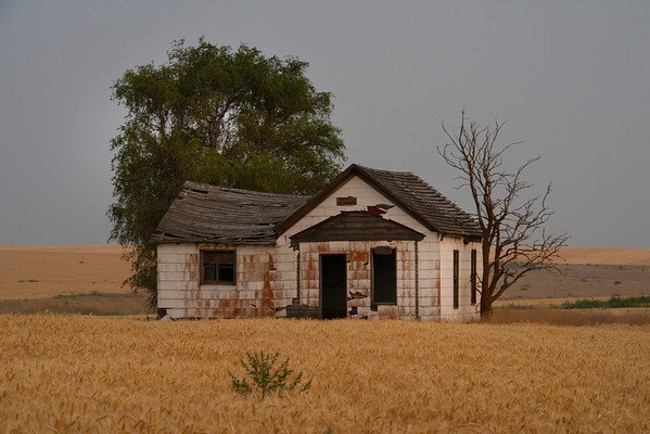 An Abandoned Home In The Wheat Field