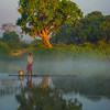 Fisherman In Perfect Sync Passing Tree Kaziranga National Park, Assam, North-Eastern India