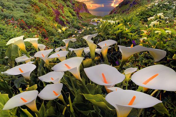 Cala Lily Sunset - Garrapata State Park, Big Sur Coastline, California