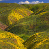 Hillside And Valleys Of Color - Carrizo Plain National Monument , California