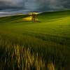 Casts Of Light Under Storm Clouds - The Palouse Region, Washington