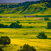 Orchards Of Yellow And Green - Badlands National Park, South Dakota