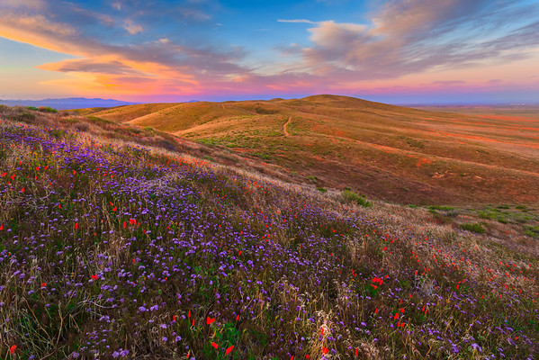 Top Of The World - Antelope Valley California Poppy Reserve SNR,<br />  California