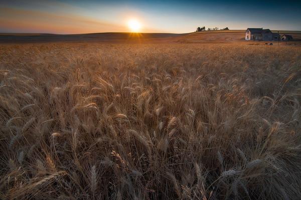 Sunrise Warmth Spreading Across The Wheat