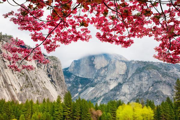 Signs Of Spring In Yosemite - Yosemite National Park, California