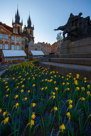 Daffodils In The Main Square In Early Morning