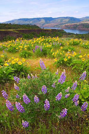 X Marks The Spot - Rowena Plateau, Tom McCall Preserve Area,Oregon