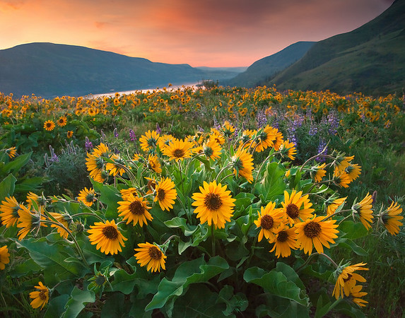 The Twilight Hour - Rowena Crest - Tom McCall Preserve Columbia Gorge Scenic Area , Oregon