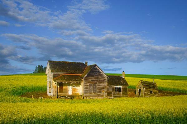 Webber House In Canola - The Palouse Region, Washington