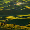 Morning Light Streaking Across Palouse Tops - The Palouse Region, Washington