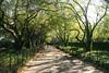 walkway4371