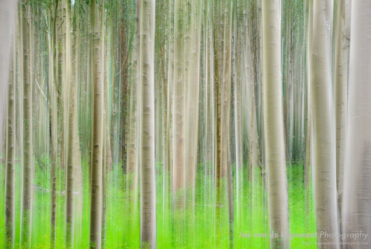 Forest ghosts
