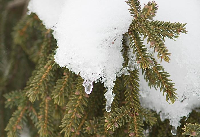 Winter_2011_Flushing_002