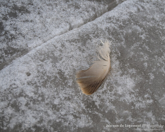feather and crack