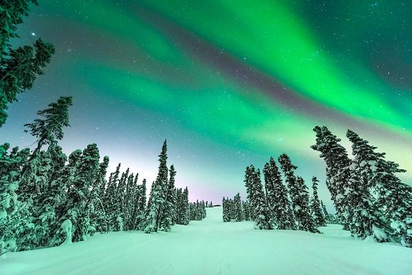 Converging Trees Northern Light -Fairbanks, Mt Aurora Skiland, Alaska