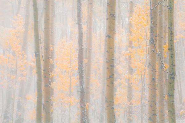 The Contrast Of Light And Dark - Maroon Bells-Snowmass Wilderness, Aspen, Colorado