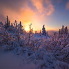 Hoar Frost Sunburst -Ester Dome, Fairbanks, Alaska
