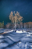 A Winter Tree Solo Under The Stars- Chena Hot Springs, Chena, Alaska