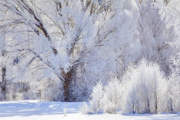 Frozen Figures - Grand Teton National Park, Wyoming