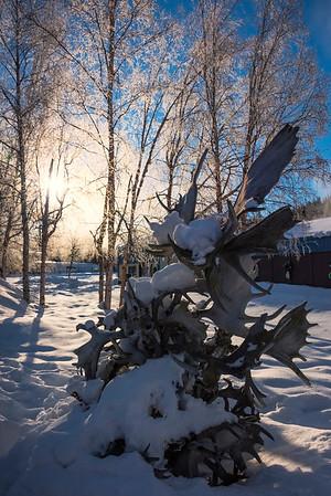 A Rack Of Moose Antlers -Chena Hot Springs Resort, Fairbanks, Alaska