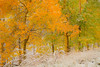 A Descending Row Of Colors In Snow - Maroon Bells-Snowmass Wilderness, Aspen, Colorado