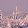 Snow Storm On Ester Dome -Ester Dome, Fairbanks, Alaska