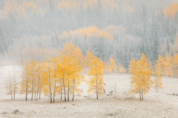 Meshing Autumn And Winter Together - Maroon Bells-Snowmass Wilderness, Aspen, Colorado