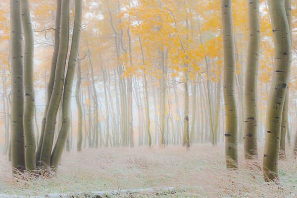 A Journey Into Autumn Moments - Maroon Bells-Snowmass Wilderness, Aspen, Colorado