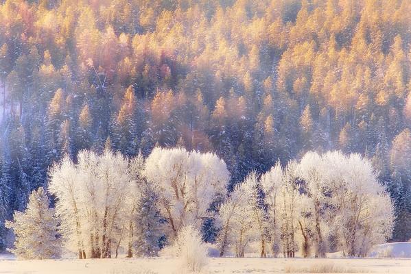 Winter Dreams - Grand Teton National Park, Wyoming