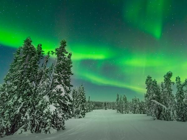 Tracks Of Snow -Fairbanks, Mt Aurora Skiland, Alaska