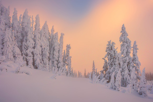 Sunset Reds Showcasing Fresh Snow - Paradise Area, Mount Rainier National Park, WA