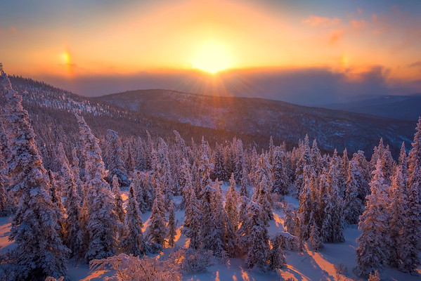 Sunset Glow Over The Forest Floor -Ester Dome, Fairbanks, Alaska