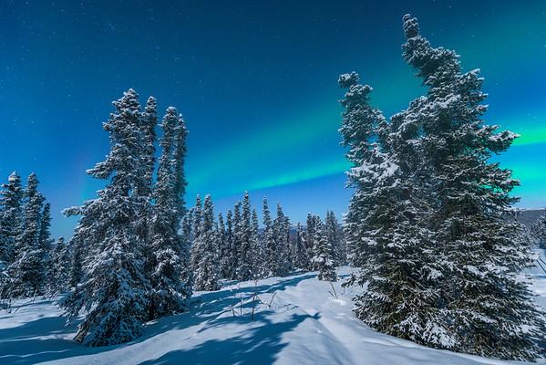 Streaks Of Northern Lights Across The Forest -Mt Aurora Skiland, Fairbanks, Alaska
