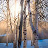 Sun Rays Through The Birch Trees -Chena Hot Springs Resort, Fairbanks, Alaska