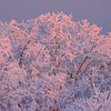 A Touch Of Pink Light -Ester Dome, Fairbanks, Alaska