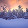 Hoar Frost Against Red Sky -Ester Dome, Fairbanks, Alaska