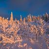 Frozen Figures At Sunset -Ester Dome, Fairbanks, Alaska