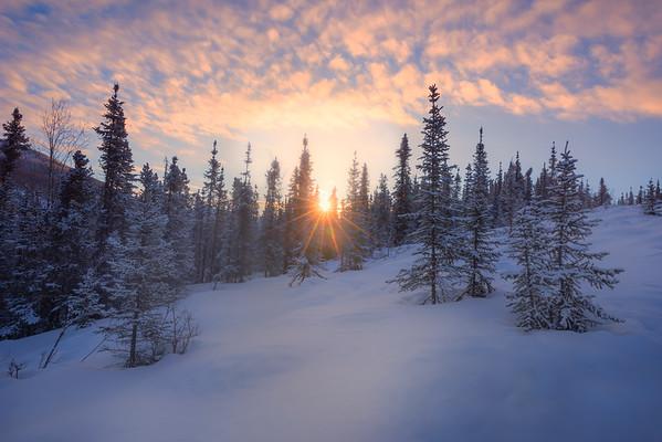 Sunburst Through Trees At Top Of Trail -Chena Hot Springs Resort, Outside Fairbanks, Alaska