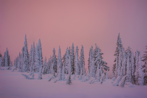 Snow Ghosts Standing Tall In Red Glow - Paradise Area, Mount Rainier National Park, WA