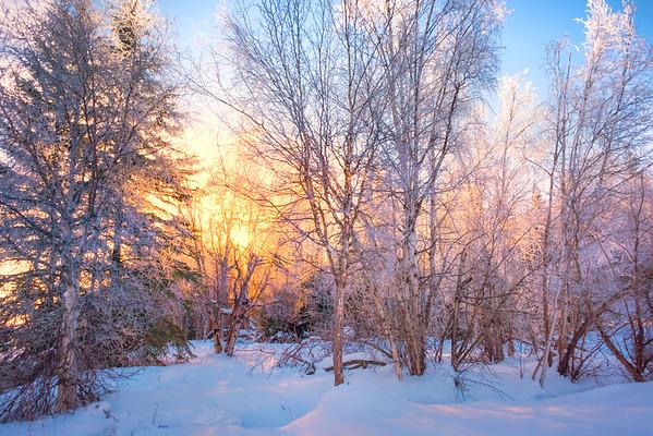 A Morning Frosty Breakthrough -Chena Hot Springs Resort, Fairbanks, Alaska