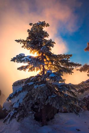 The Solo Tree And The Sunrise -Chena Hot Springs Resort, Fairbanks, Alaska