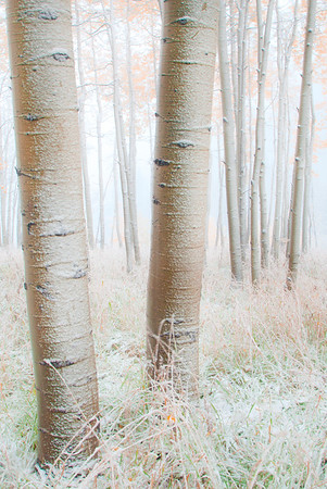 Frozen Ghosts Of Winter - Maroon Bells-Snowmass Wilderness, Aspen, Colorado