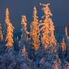 Dark Storm Clouds And Sunset Light -Ester Dome, Fairbanks, Alaska